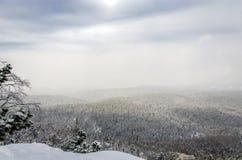 Vinterskog med fågels öga Arkivfoto