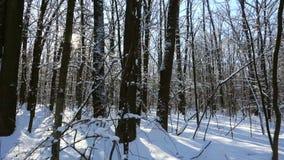 Vinterskog med snö och solljus arkivfilmer