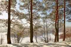 Vinterskog med snö-täckte filialer av träd felik skönhet Arkivfoton