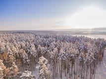 Vinterskog och äng flyg- sikt Solig frostig dag och snöfall Fält och djupfrysta sjöar på bakgrund arkivbild