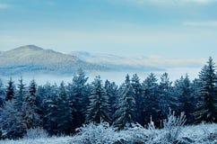 Vinterskog och berg royaltyfri bild