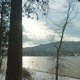 Vinterskog och sjö Royaltyfri Foto