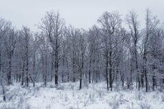 Vinterskog och snö Arkivfoton