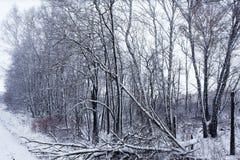Vinterskog och snö Royaltyfri Foto
