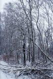 Vinterskog och snö Arkivbild