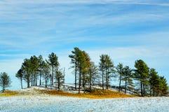 Vinterskog på en snöig kulle Arkivfoton