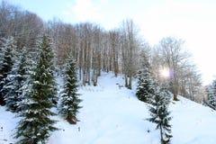 Vinterskog på solnedgången royaltyfria foton
