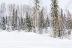 Vinterskog, taiga Skog i vinter i Sibirien Taiga sörjer i vintern snowtrees under Arkivfoto