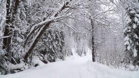 Vinterskog under ett tungt snöfall arkivfilmer