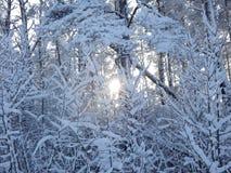 Vinterskog Vitryssland Minsk område arkivbild