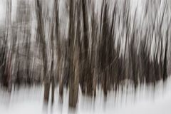 Vinterskogabstrakt begrepp Arkivfoton