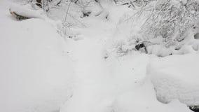 Vinterskogbusksnår stock video