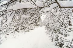 Vinterskogdesign: arkivbild