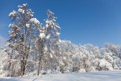 Vinterskogen för den soliga dagen, snö täckte träd mot blå himmel Snöig landskap för kallt säsongväder Snöig xmas-bakgrund arkivfoton