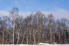 Vinterskogen i ett klart väder Arkivfoto