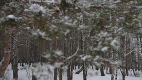 Vinterskogen sörjer stock video