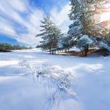 Vinterskogen sörjer trädsnö Fotografering för Bildbyråer