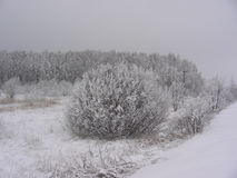Vinterskogen som täckas med ett lager av snö Arkivbild