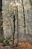 Vinterskoglandskap Royaltyfria Foton