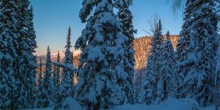 Vinterskoglandskap i berget arkivbild