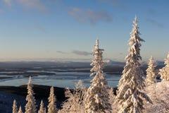 Vinterskoglandskap, Kola Peninsula, Ryssland royaltyfria bilder