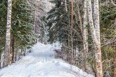 Vinterskoglandskap med insnöat kallt väder Karelia fotografering för bildbyråer