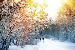 Vinterskoglandskap med skidåkningfolk Royaltyfria Foton