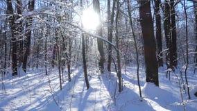 Vinterskoglandskap med snö och solljus lager videofilmer