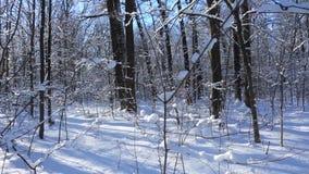 Vinterskoglandskap med snö på träd stock video