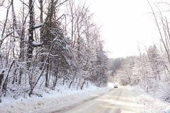 Vinterskogsikt från huvudvägen Royaltyfri Bild