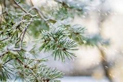 Vinterskogsol och snö Royaltyfria Foton