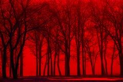 Vinterskogträd i röd dimma royaltyfri bild