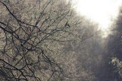 Vinterskogträd i snön Royaltyfri Fotografi