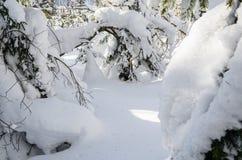 Vinterskogträd i snön Fotografering för Bildbyråer