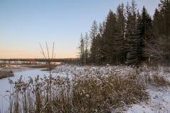 Vinterskogväg och sol royaltyfri foto