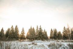 Vinterskogväg och sol arkivfoton
