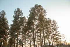 Vinterskogväg och sol royaltyfria bilder