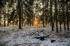 Vinterskogväg och sol fotografering för bildbyråer