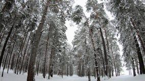 Vinterskogvägen i träna i vinter arkivfilmer