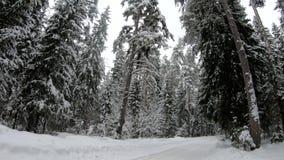 Vinterskogvägen i träna i vinter stock video
