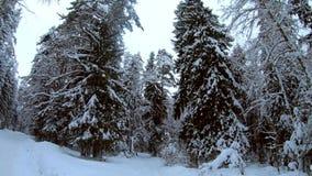 Vinterskogvägen i träna i vinter lager videofilmer