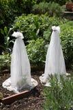 Vinterskydd av plantor Arkivfoto