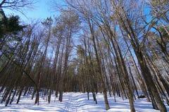 Vinterslinga fotografering för bildbyråer