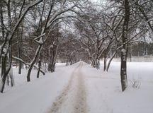 Vinterslinga Royaltyfri Fotografi