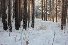 Vinterslinga Royaltyfri Foto