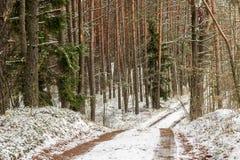 Vinterslinga Royaltyfria Foton