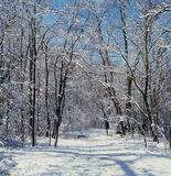 Vinterslingamorgon Arkivfoton