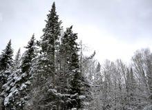 Vintersnö på trädfilialer två Arkivbild