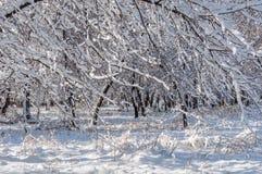 Vintersnö parkerar träd Arkivbild