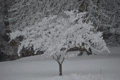 Vintersnöfall Arkivfoto